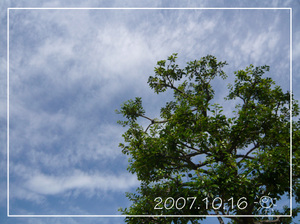20071016_1_a_2
